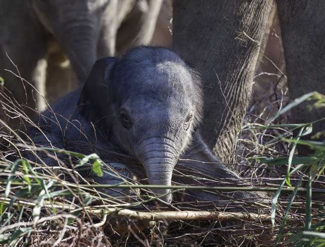 Dublin Zoo Announces Birth Of Baby Elephant