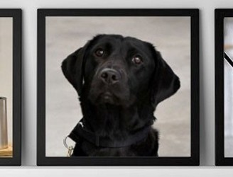 Bomb Sniffing Dog Fired By CIA For Refusing To Sniff Bombs