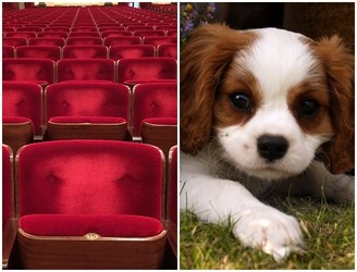 Dublin Cinema Holding Dog Friendly Screening On Good Friday