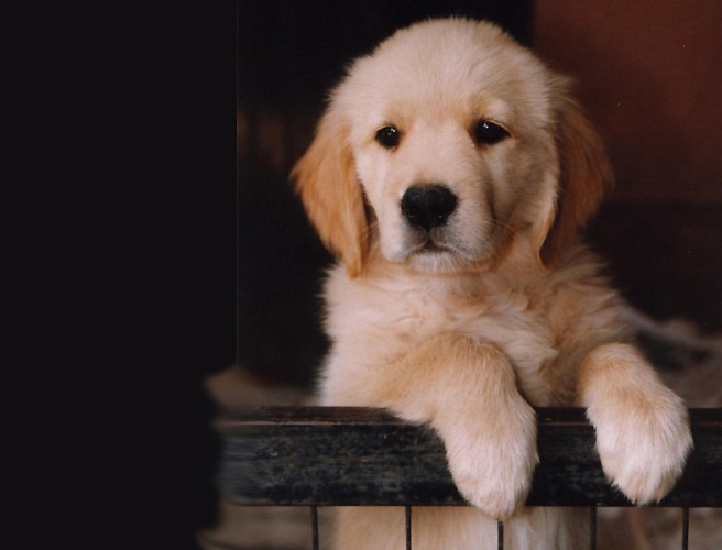 Dublin Company Offering 'Pawternity Leave' For Staff With New Pets