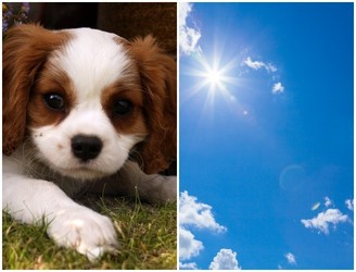 Tips For Keeping Your Pets Safe During The Hot Weather