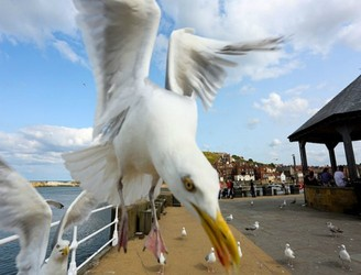 Seagulls Are Terrorising People All Over Dublin!