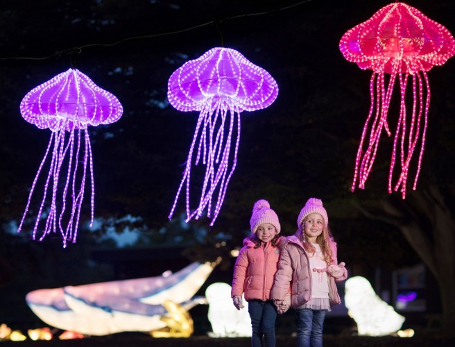 Wild Lights At Dublin Zoo Is Returning This Winter