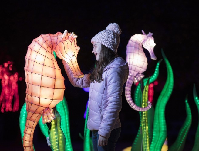 Here's How You Can Win Tickets To Wild Lights At Dublin Zoo Today