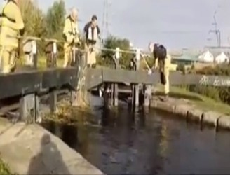 Two Horses Almost Drown To Death In Canal At Bluebell
