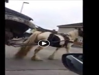 Truth Behind Viral Video Of Horse In Ballyfermot
